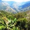 dzungla-i-andi-bolivia-coroico