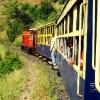 Indija - Voz