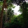 gvatemala-manga-trip-10