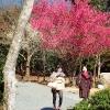 proleće u Kjotu