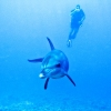 podvodni-svet-krita