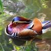 bird-park-langkawi