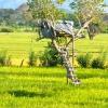 Sri Lanka  - dzungla - pirinac - plantaze - caj - polja - seljaci - siromastvo