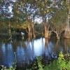 Sri Lanka - dzungla - jezero - slonovi - sigiriya - sigirija - divljina