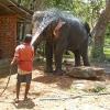 Sri Lanka Sigiriya - Sigirija - Jahanje slonova - slonovi - dzungla - kupanje slonova
