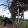 Sri Lanka - Sigiriya - Sigirija dzungla - domoroci