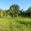 Sri Lanka dzungla - pirinac - plantaze - caj - polja - seljaci - siromastvo - dzungla - banane - palme
