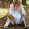 Sri Lanka hram - biblioteka - kralj - polonaruva - kraljevstvo - budisti - hinduisti - monasi - majmuni