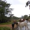 Sri Lanka - dzungla - krave - hram - biblioteka - kralj - polonaruva - kraljevstvo - budisti - hinduisti - monasi