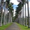 Sri Lanka - kendi - kandy - grad - centar - suma - botanicka basta - ljudi - stanovnistvo - budin zub - hram -