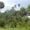 Sri Lanka - kendi - kandy - grad - centar - suma - botanicka basta - ljudi - stanovnistvo - budin zub - hram - palme