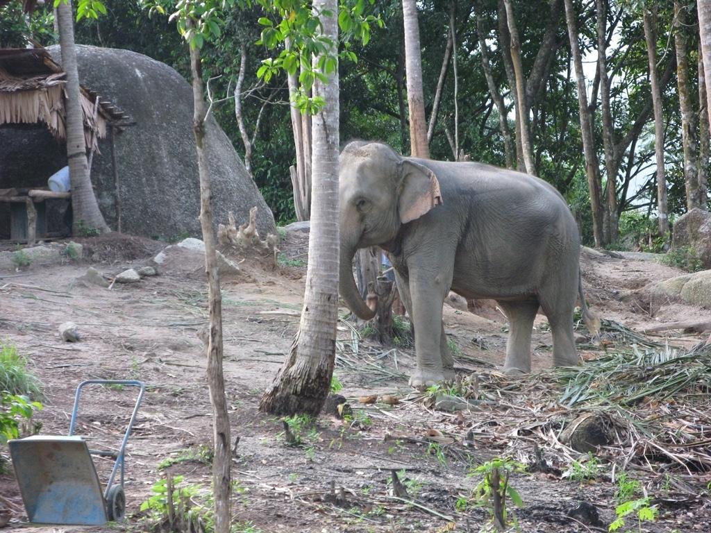 Tajlandske zurke