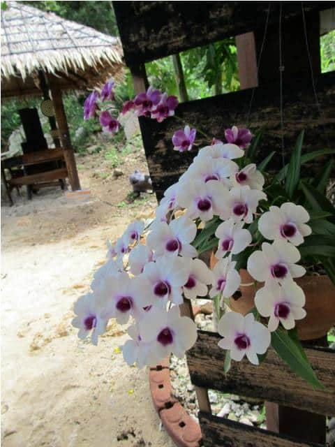 mangatrip-tajland-avantura-orhideje