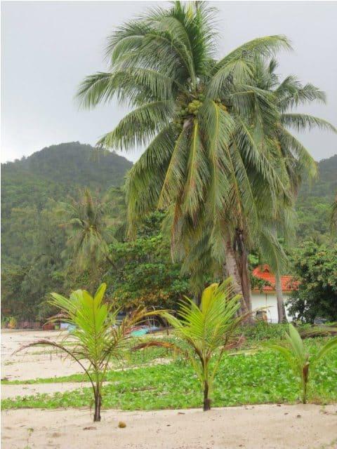 mangatrip-tajland-avantura-palme