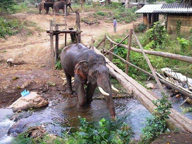 Tajland - kupanje slonova