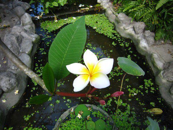 Tajland - Leelavadee