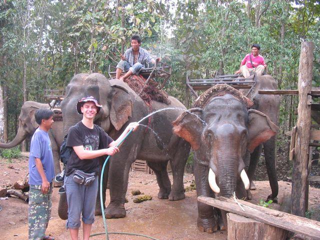 Tajland - zalivanje slonova :)