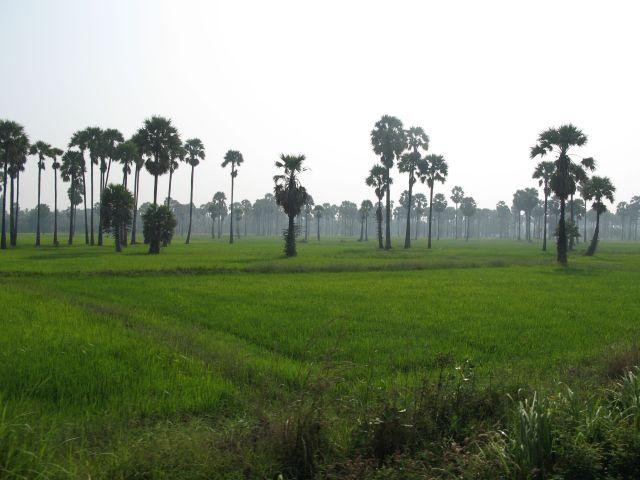 Tajland - Kod Suratanija