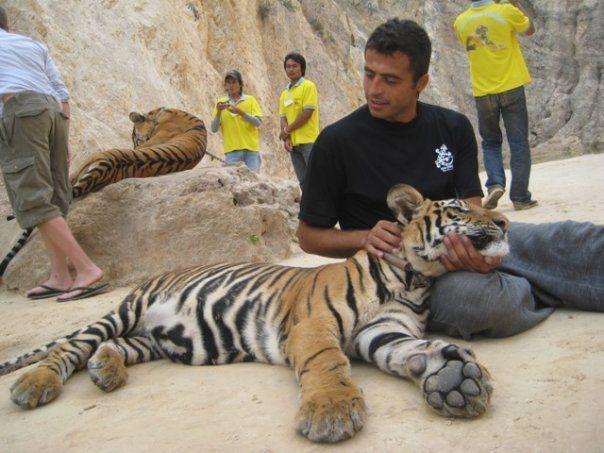 Tajland - hram tigrova