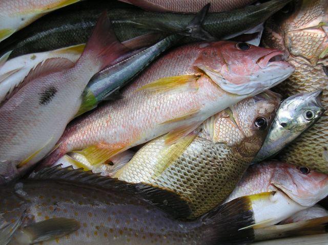 Tajland - Pecanje