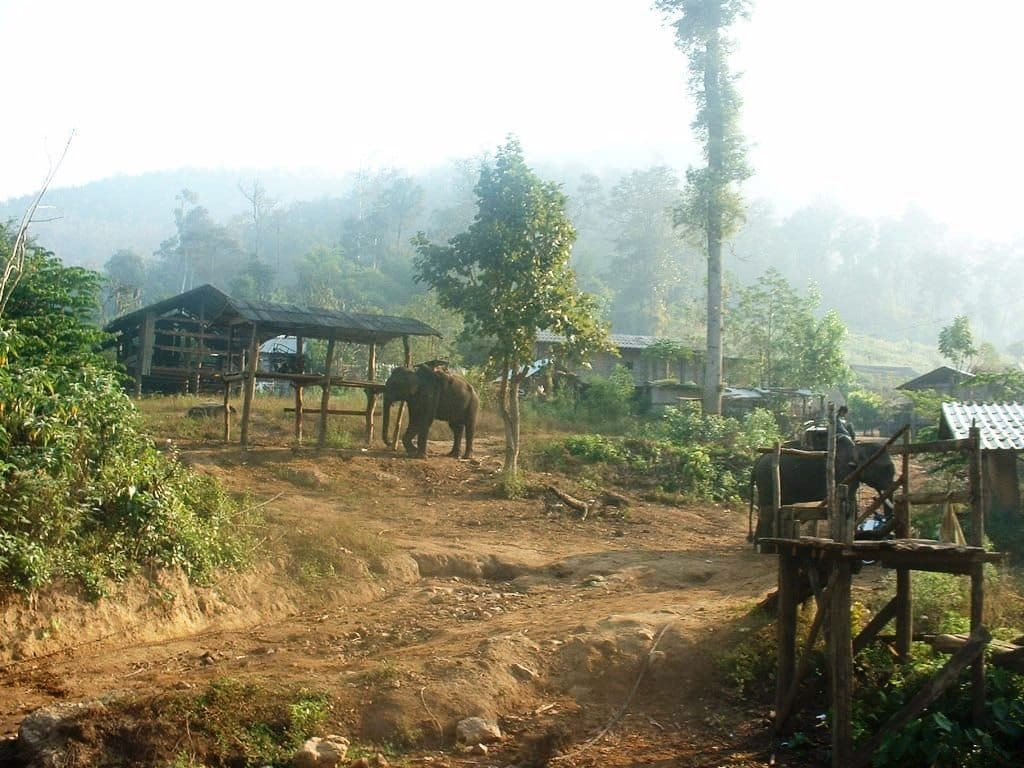 Kamp slonova
