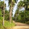 tajland - Džungla - Koh Phan Gan
