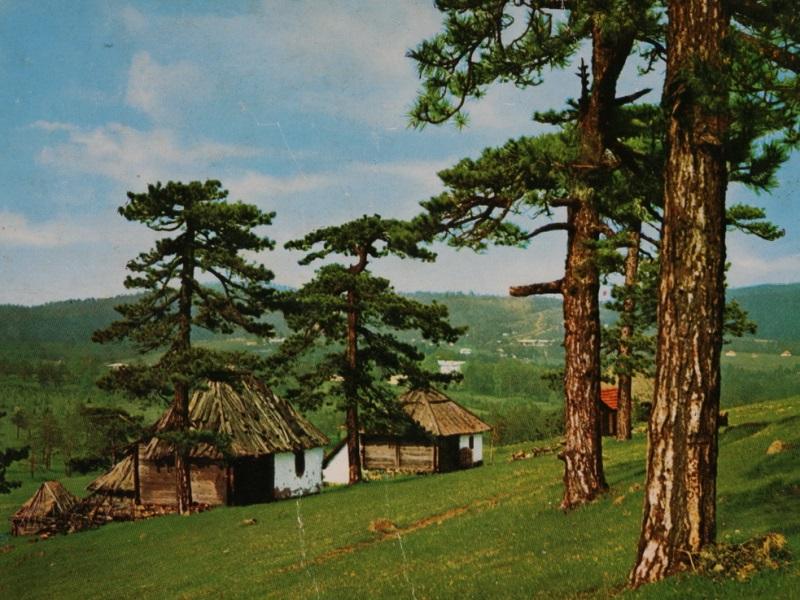 Obedska Bara - Divčibare