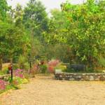 chitwan 1