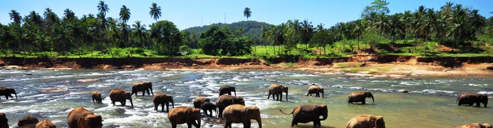 Pinavela Sri Lanka