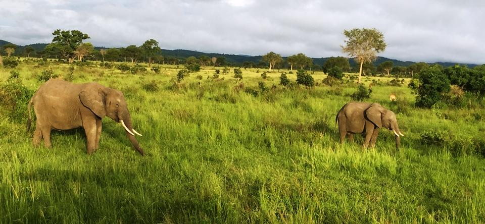 Safari - Mikumi MangaTrip