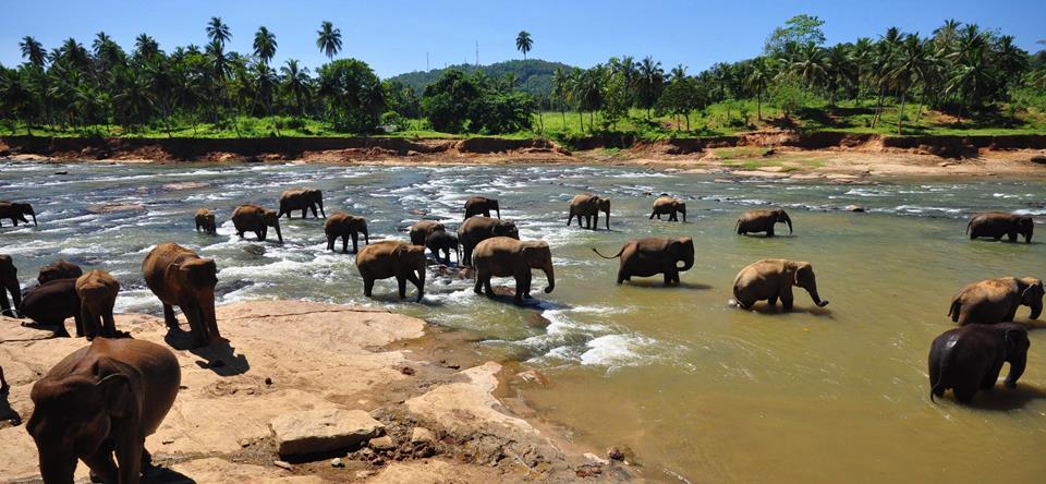 Rezervat za slonove