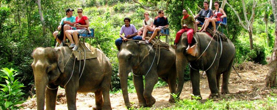 jahanje-slonova